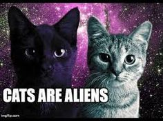Image result for cat aliens