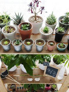 Exposez vos plantes comme des livres, par catégorie, par couleur et par taille