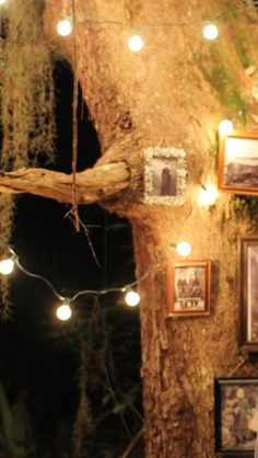 Framed pictures and Christmas lights on a tree. Perfect for a party or a wedding!