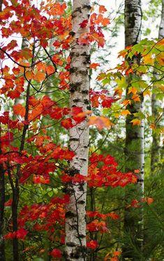 Fall moment love