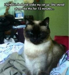 61 Pictures That Are Hilarious Af - Page 3 of 6 - LADnow #catsfunnyhilarious