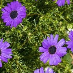 Rosliny Jednoroczne I Dwuletnie Do Ogrodu Katalog Roslin Zielony Ogrodek Plants Garden
