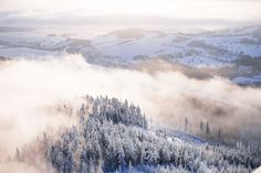 Free Image: Fog In Snowy Forest Winter Scenery | Download more on picjumbo.com!