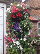 Hanging Basket Entry Number Six #hangingbasket #garden #gardening #flowers #inspiration #summer