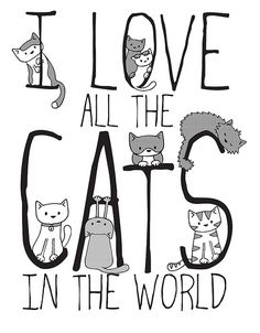 List Of Cute Animals To Draw until Crazy Cats Cooking Games inside 72 Cutest Animals Full List Neko, I Love Cats, Cute Cats, Funny Cats, Cats Humor, Funny Humor, Crazy Cat Lady, Crazy Cats, Animal Gato