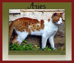 http://catwisdom101.com/the-aries-cat/