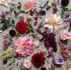 #adelineloves #botanical #adelineinspiration