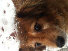 Sunia in tha snow!