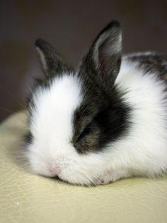 Bunny fell asleep