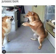 dog meme of two dogs fighting with each other and one looks like a t-rex The post 27 Incredibly Hilarious Dog Memes appeared first on Dog Memes. Funny Dog Memes, Funny Animal Memes, Cute Funny Animals, Funny Animal Pictures, Cute Baby Animals, Funny Cute, Funny Dogs, Hilarious, Shiba Inu