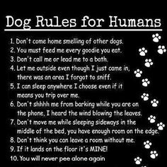 Shih tzu rules for humans.♡