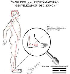 LOS VASOS MARAVILLOSOS UNO POR UNO: 3- CANAL YANG KEO | Qisoma