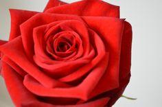 Red Naomi van Marjoland Valentino, Roses, Van, Pink, Rose, Vans, Vans Outfit