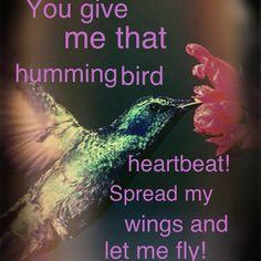 Hummingbird Heartbeat ~Katy Perry