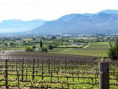 #Franschhoek Winelands