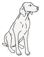 120 Best Weimaraner Books Images Weimaraner Pets Dogs