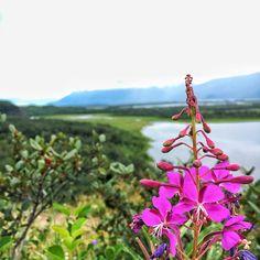Vacation Rentals by Knick Glacier, Anchorage, Palmer Palmer Alaska, Unique Cottages, Albert Einstein, Photo Credit, Climbing, Woods, Dan, Trail, Hiking