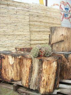 Semi ready stools from pine tree logs.