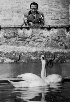 Salvador Dali with swans, photographed by Agustí Centelles.