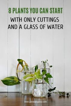 In this article we've got this quick reference for some of the easiest plants … – Szobanövények – flowers Inside Plants, Ivy Plants, Indoor Water Garden, Ivy Plant Indoor, Water Garden Plants, Indoor Herbs, Water Gardens, Plant Cuttings, Spider Plant Propagation