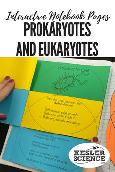 Compare and contrast prokaryotes and eukaryotes with this venn diagram flip book. Includes images of prokaryotic and eukaryotic cells to color and label when teaching a biology unit. Turn science notebooks into a fun, interactive, hands-on learning experience for your upper elementary or middle school students! Grades 4th 5th 6th 7th 8th 9th 10th