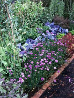 Herb Border is Activity Whole Family Can Enjoy.  Plainning your Veggie Garden:  Design your Plot.