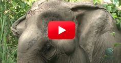 Check In With These Elephants That Were Released Into The Wild. What A Great Story! | The Rainforest Site Blog