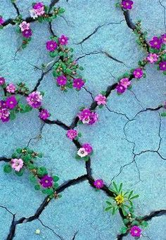 flowers in cracks.