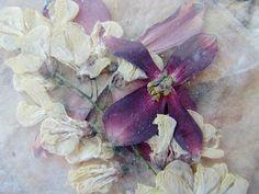 pressed flowers, roxanne evans stout photo
