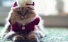 Vacanța de Crăciun pisici sezon rezoluție drăguț mare