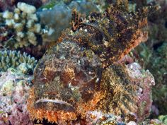 This fish is quite the master of disguise. Can you spot it?