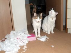 Cats after prank