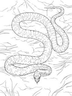 gopher snake coloring page