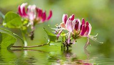 Tratar o indivíduo, e não a doença. Eis o fundamento dos Florais de Bach.   http://www.eusemfronteiras.com.br/conheca-os-florais-de-bach/