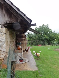 Roosters on Grandfather's homestead in Croatian countryside