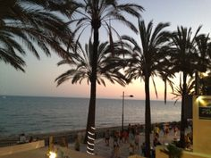 Palm trees and sea in Marbella