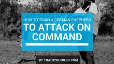 In this article, I will teach you how to train a German Shepherd to attack on your command. This is one of the best commands you should teach to your dog.