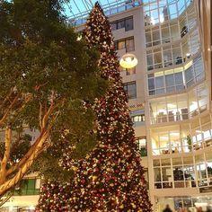 TROTS op onze 16m kerstboom!   Van 1.85 cm tot een 16 m hoge kerstboom. We make magic happen!   #mostwonderfultimeoftheyear #kerst #rijnstate #sfeerbeleving #christmas #decorations