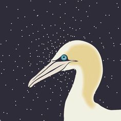 Gannet in space.