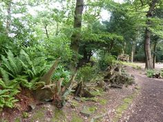 Stumpery with ferns