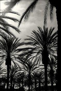 Twentynine Palms by cdodkin, via Flickr