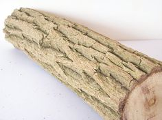 Elder wood log#wood stump#elder branch#natural wood#dried wood#craft project#natural supplies#home decor#DIY project#woodworking#woodland