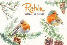 watercolor robin bird clipart - Illustrations - 4