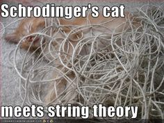 Schrodinger's cat meets string theory Weird dream with writing on a wall. Nerd Jokes, Nerd Humor, Weird Science, Science Humor, Life Science, Funny Facts, Funny Memes, Cat Memes, Hilarious