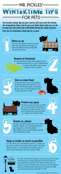 Useful Tips When You Travel With Your Dog.