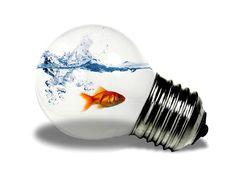 50 Creative Photo Manipulations Based on Light Bulbs – Photoshop and photography galleries Light Art, Light Bulb, Fish Wallpaper, Beautiful Fish, Photography Gallery, Illustrations, Creative Photos, Creative Thinking, Art Plastique
