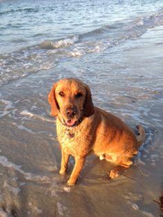 Dog friendly places in & around Sydney