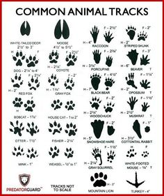 How To Identify Signs of Wild Animals – Predator Guard – Predator Deterrents and Repellents - hunting Whitetail Deer Hunting, Quail Hunting, Deer Hunting Tips, Turkey Hunting, Hunting Gear, Hunting Dogs, Crossbow Hunting, Crossbow Arrows, Hunting Stuff