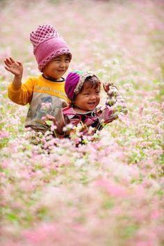 Khám phá bản đồ hoa tam giác mạch Hà Giang