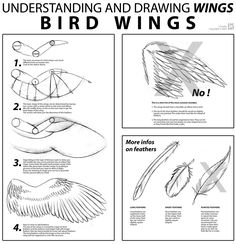 Bird Wings Tutorial by ~cactusart on deviantART